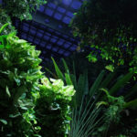 Night Vivarium